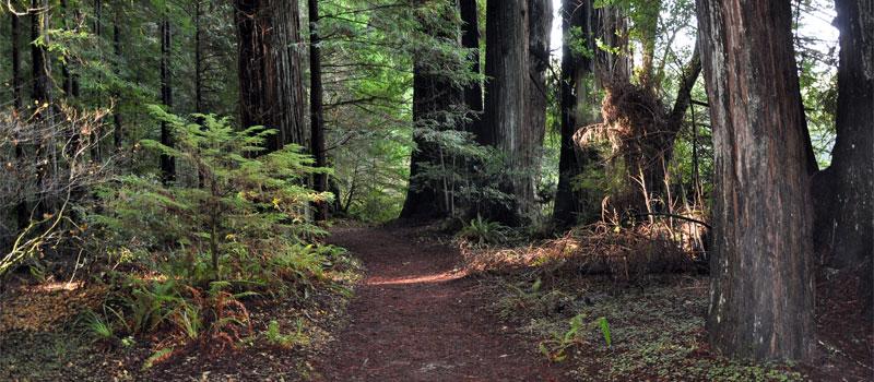 Hiouchi Trail