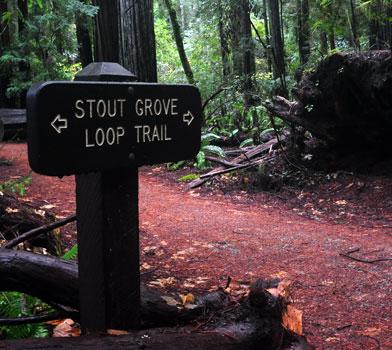 Stout Grove Trailhead