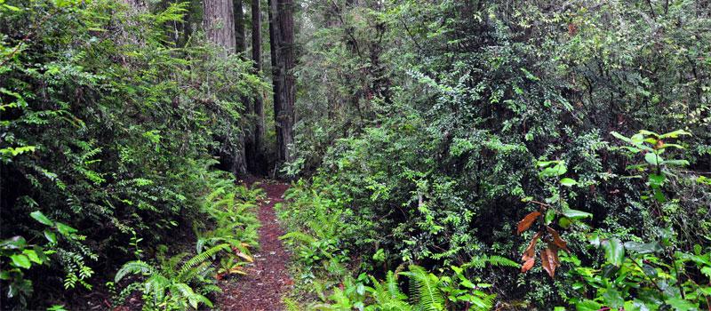 Wellman Trail