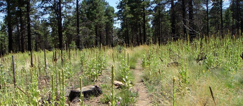 Deer Hill Trail