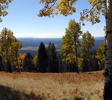 Kachina Trail Landscape