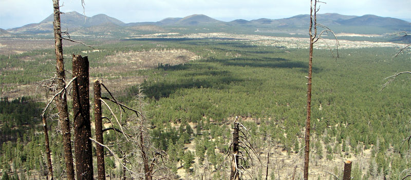 Little Bear Trail