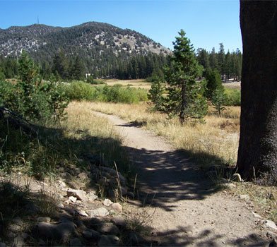 Tahoe Meadows Loop Trail - Humboldt Toiyabe National Forest