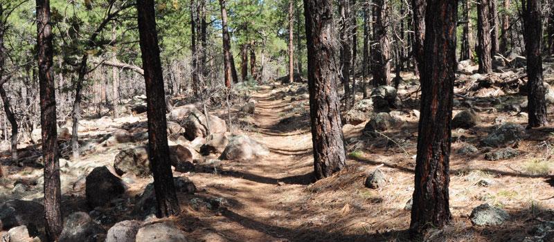 Buckskinner Trail