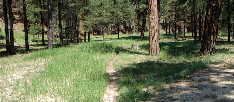 Ceballos Loop Trail
