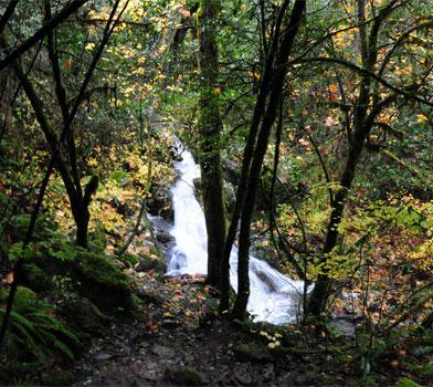 Limpy Botanical Loop Trail