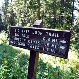 Big Tree Loop Trail