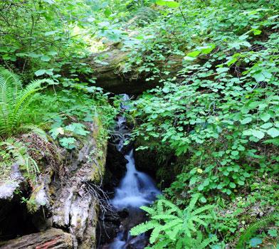 No Name Trail Flora
