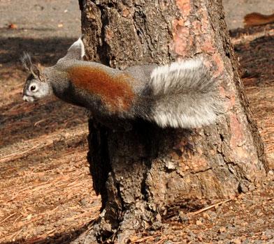 Squirrel at Lenox Crater
