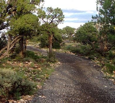 Trees at East Rim Trail
