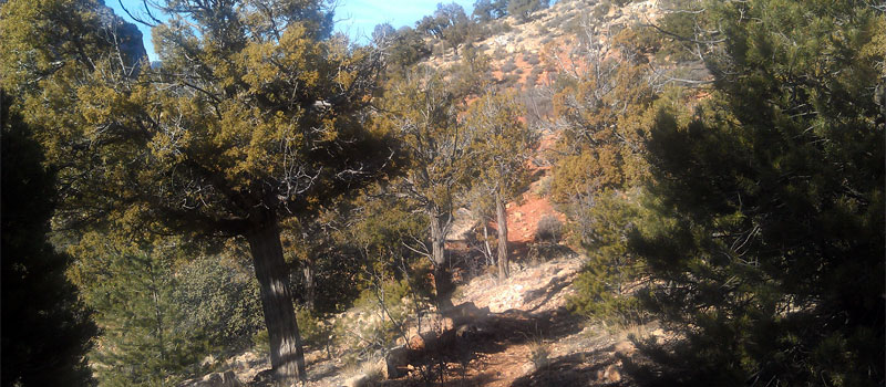 Waldron Trail