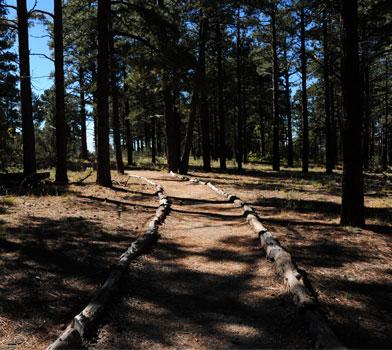 Trees at Walhalla Trail