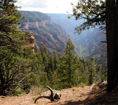 The Grand Canyon at Widforss Trail