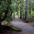 Darlingtonia Trail