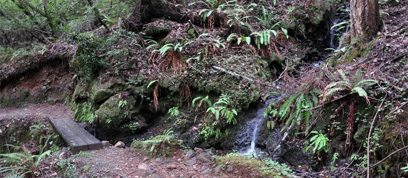 Myrtle Creek Trail